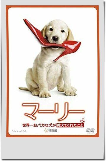 親子で観たい動物映画ランキング第3位マーリー 世界一おバカな犬が教えてくれたこと